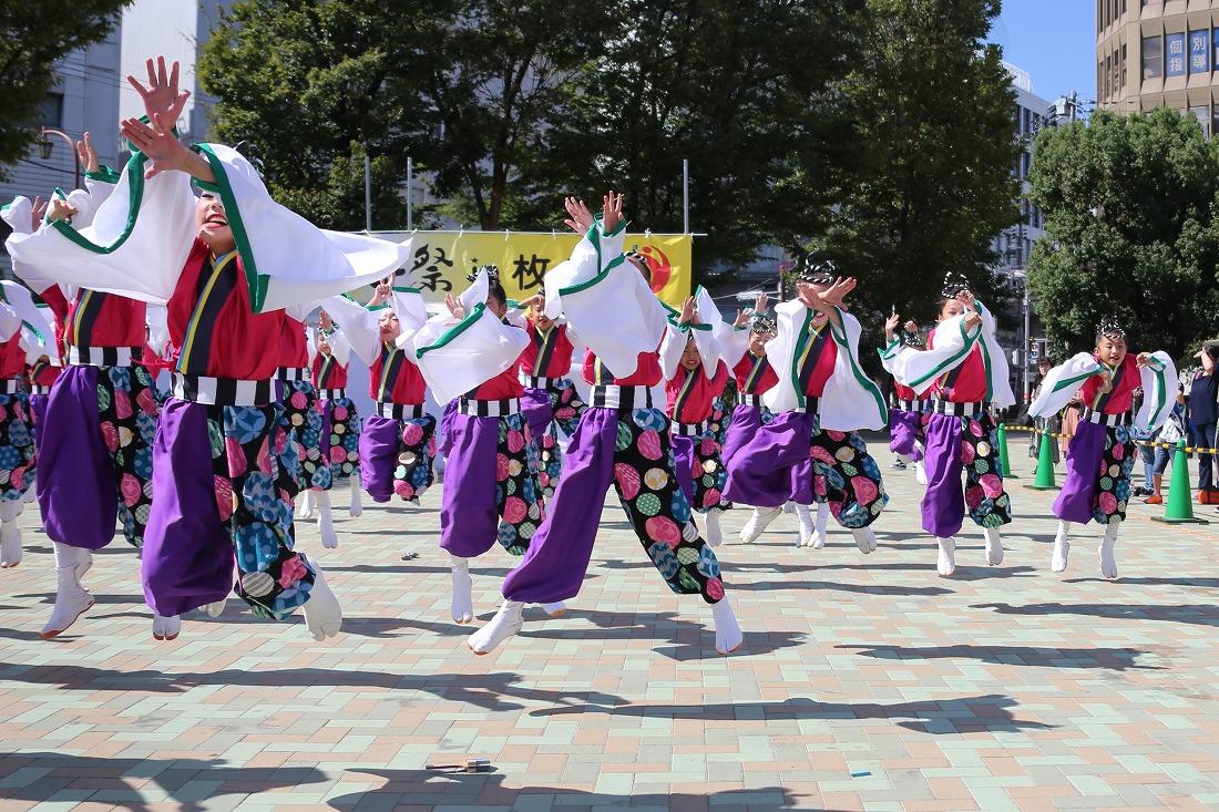mecya18sakurahira 50