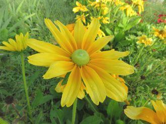 001黄色い花