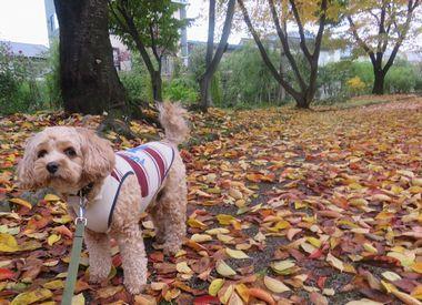 036落ち葉の公園黄色