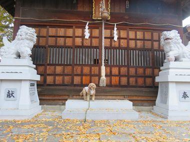 006えびす講神社