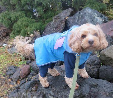 003雨散歩