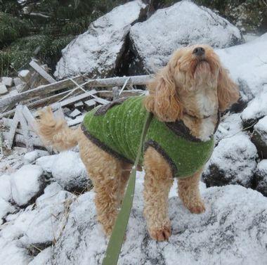 005雪散歩