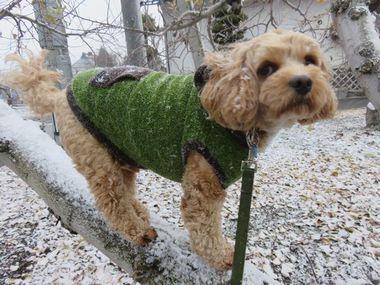 008雪散歩