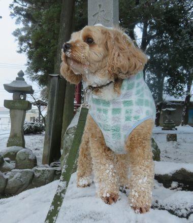 010雪散歩