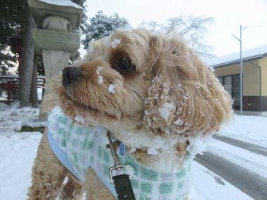 034雪散歩
