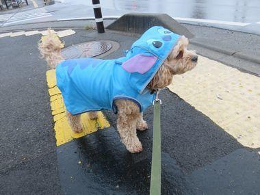 002雨散歩