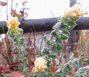 016黄色い花