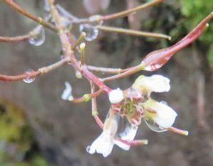 021種漬花