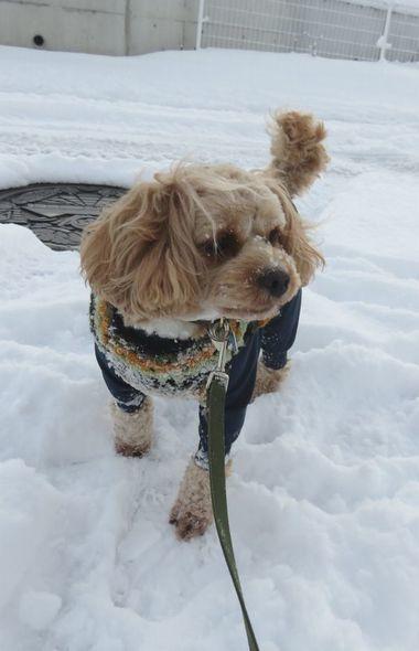 006雪散歩
