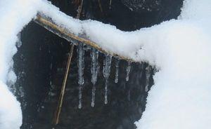 015草凍る