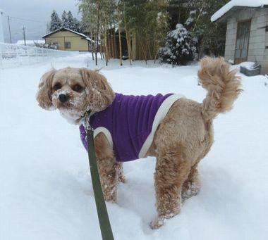 001雪道散歩