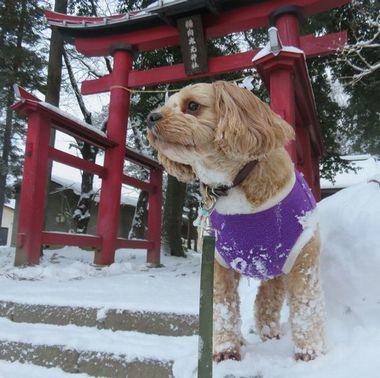 005雪道散歩