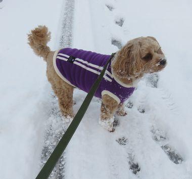 016雪道散歩