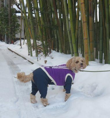 005うっすら雪