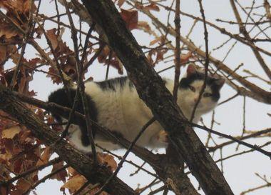 007黒白猫