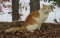 004茶白猫
