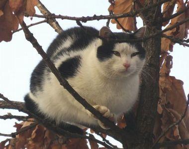 011黒白猫