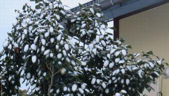 016うっすら新雪