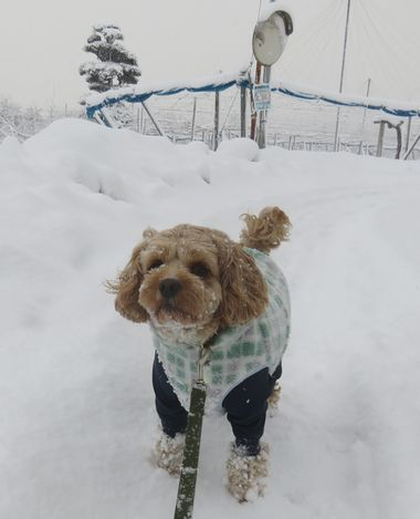 003雪道散歩