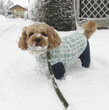 013雪道散歩