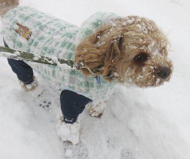 014雪道散歩