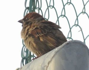 027野鳥