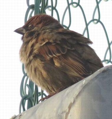 027野鳥1