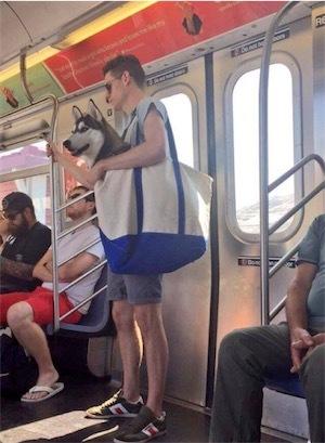 ニューヨークの地下鉄は、DpDEBAjV4AAcARF