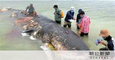 座礁クジラの胃から4qT1VYE3