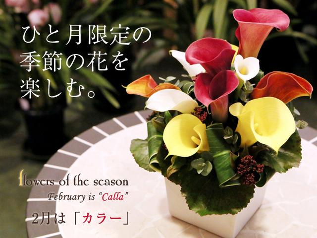 カラー 季節の花 誕生日 サプライズ 花束 アレンジ おしゃれ かわいい