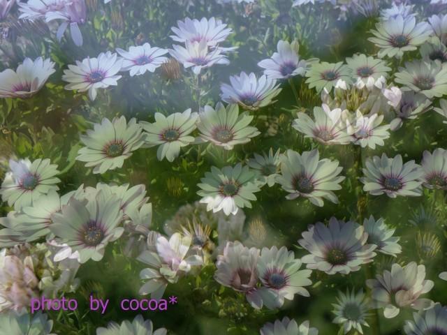 19-03-19福ふくの里菜の花 2019-03-20 17-50-55