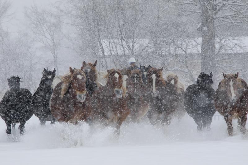 8143 雪中馬追い