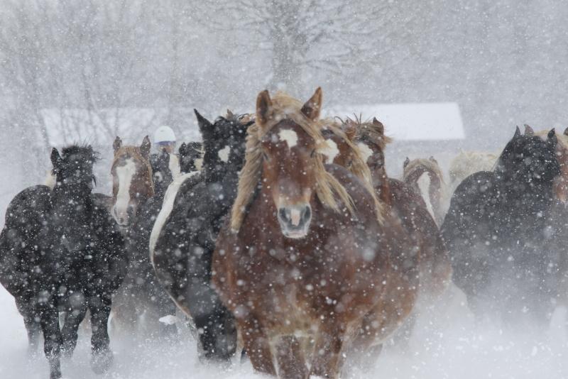 8165 雪中馬追い