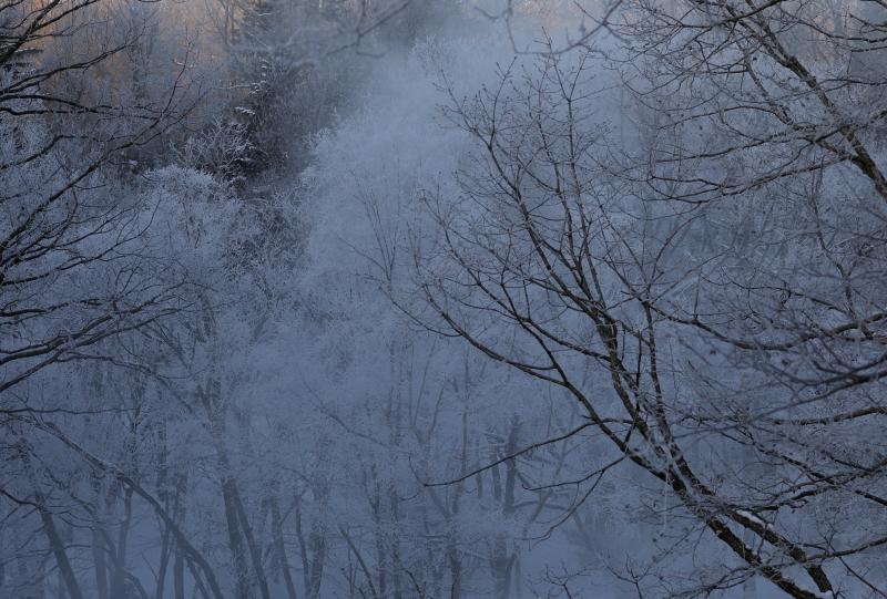 8820 霧氷