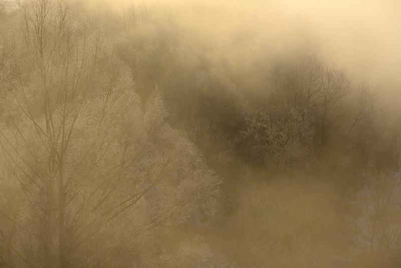 9222 染まる霧氷