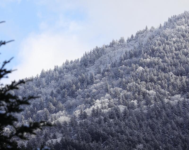 9030 霧氷した森