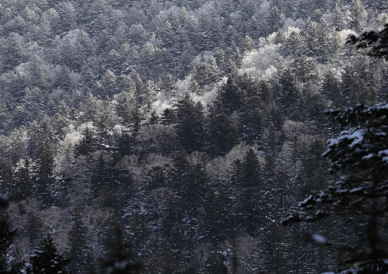 9024   A 霧氷した森