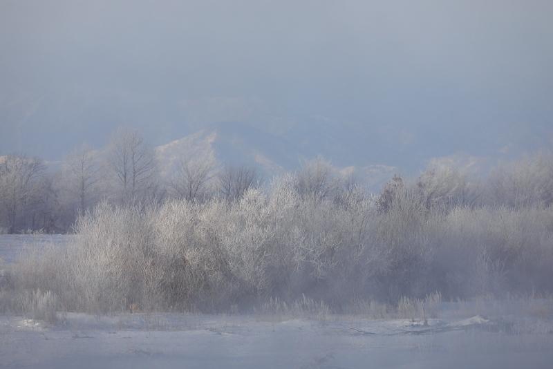 9610 霧氷した木々