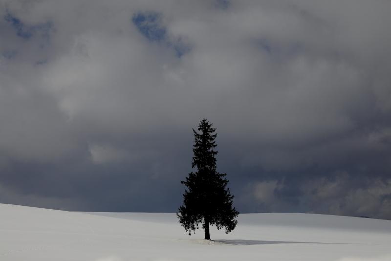 0346 クリスマスツリーの木