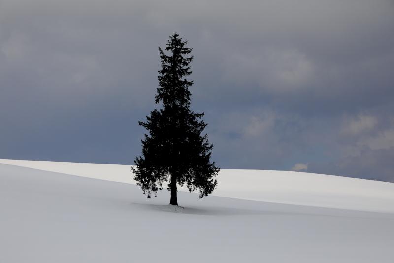 0354 クリスマスツリーの木