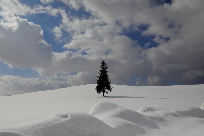 0373 クリスマスツリーの木