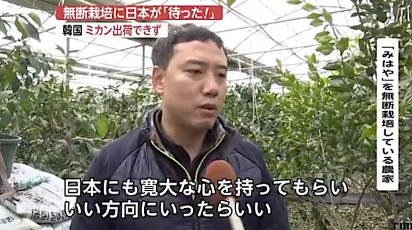 """【無断栽培】韓国のミカン農家「日本は寛大な心を持って」 日本政府の圧力によって""""みかん""""出荷できず"""