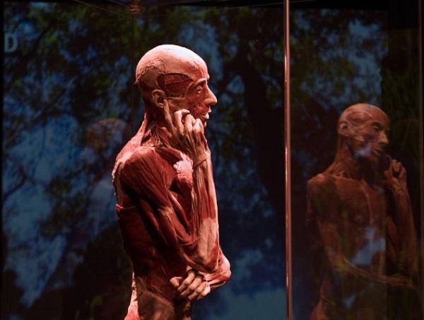 スイス、人体標本展を中止「法輪功学習者の可能性」倫理団体から苦情