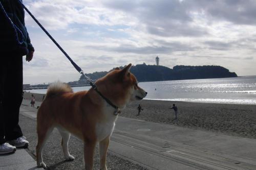 0228犬を見ていた午後