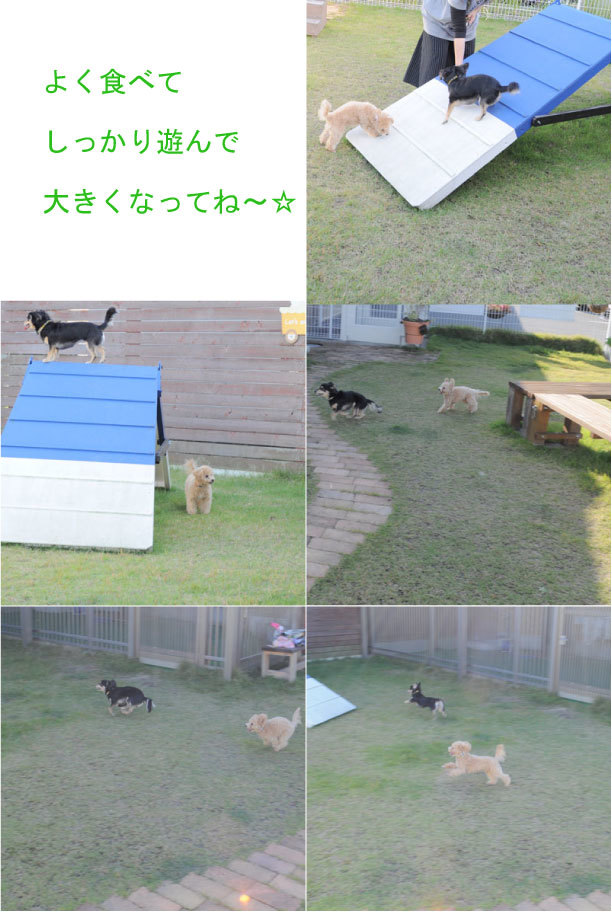 garden_201810270903030d9.jpg