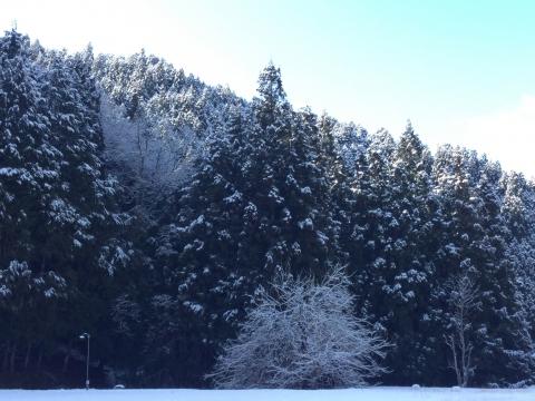 黒滝村 雪景色