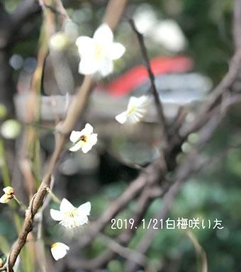 IMG_6255.jpg
