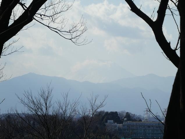 okurayamakoen190204.jpg