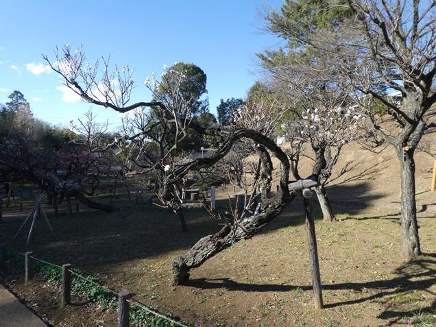 okurayamakoen190204c.jpg