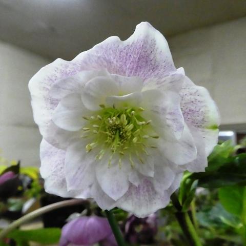 shikoku190201_34.jpg